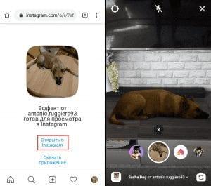 инстаграм собака лежит