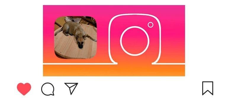 Маска с собакой в Инстаграм